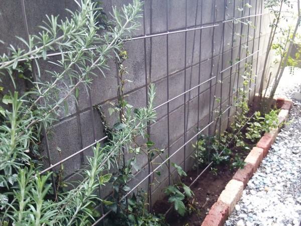 砂利をどかして植物を育てる!